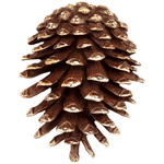 SPI Gallery - Pinecone Doorknocker - Brass