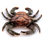 SPI Gallery - Crab Doorknocker - Brass